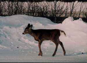 oh deer! closeup (1)