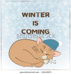stock-vector-sleeping-kitten-in-a-hat-on-background-of-falling-snowflakes-219438571