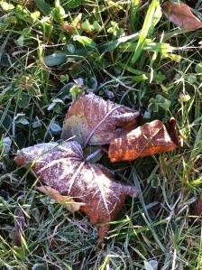 frosty Fall morning.1