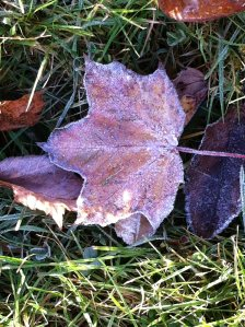 frosty Fall morning.3