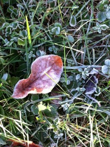 frosty Fall morning.4