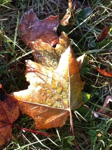 frosty Fall morning.5