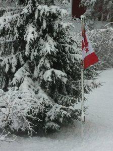 Jan 29'16 snow.2
