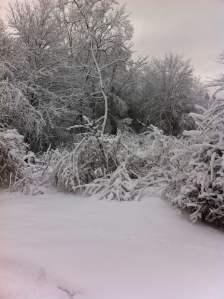 Jan 29'16 snow.3