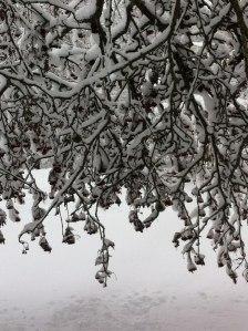 Jan 29'16 snow.4