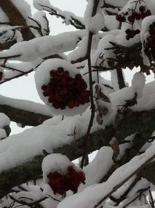 Jan 29'16 snow.5