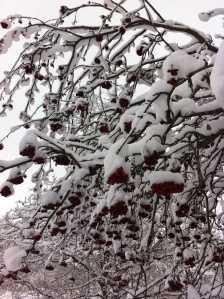 Jan 29'16 snow.6