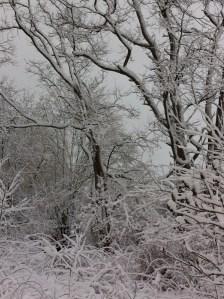 Jan 29'16 snow.9